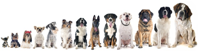 Alignement chiens