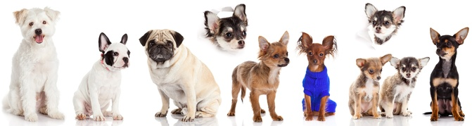 Groupe petits chiens